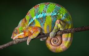 Красивый разноцветье держит нос по ветру сидит возьми ветке