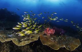 Косяк рыб на живописном подводном мире
