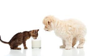 Маленькие братва котенок равным образом щеночек пьют обрат изо стакана