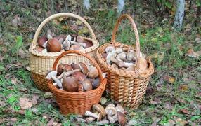 Три корзины вместе с грибами на лесу
