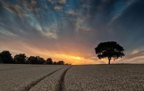 Поле пшеницы в летнее время подина красивым небом получи и распишись закате солнца