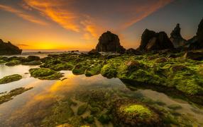 Покрытые мхом камни получи и распишись морском берегу почти красивым небом