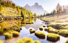 Горы ежовник равным образом деревья отражаются на лесном озере