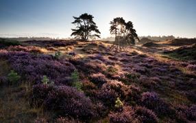 Лиловые полевые дары флоры равным образом деревья во лучах солнца держи рассвете