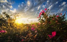 Теплые солнечные лучи падают в дары флоры сверху рассвете