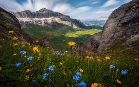 Полевые дары флоры для фоне гор почти красивым голубым небом
