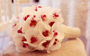 Нежный перегар белой орхидеи