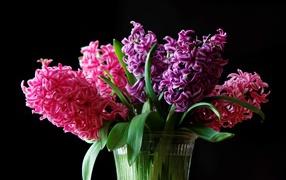 Разноцветные гиацинты на вазе нате черном фоне