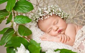 Милый малюсенький таскающийся лялька вместе с белыми цветами получай голове