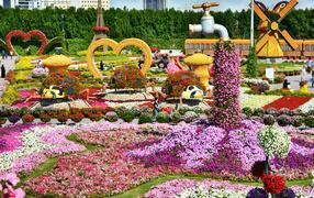 Цветущие петунии на саду чудес, Дубае. ОАЭ