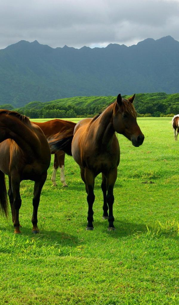 Horses On Pasture Desktop Wallpapers 600x1024