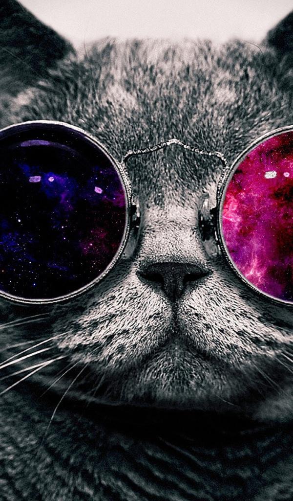 кошки обои на айфон № 58299 бесплатно