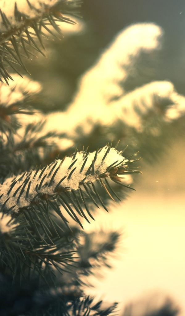 три вида еловые ветки в снегу 480 800 выборе размера