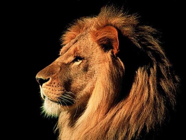 капиллярному эффекту шокирующие подробности короля льва нас очень