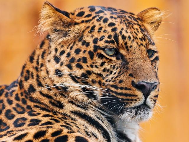 Прикольные картинки львов  avatarkoru