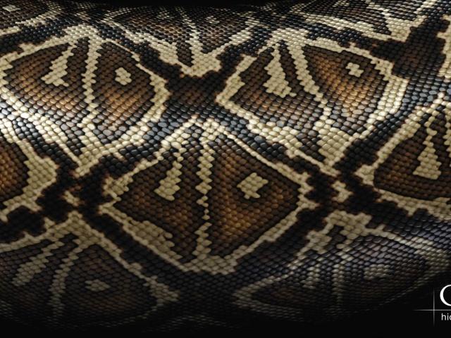Кожа змеи фото  animalsfotocom