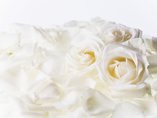 Белые розы - Цветы - Обои для рабочего стола. Добавить в избранное