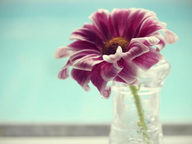 Картинки цветок одинокий