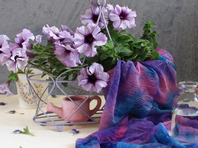 http://www.zastavki.com/pictures/640x480/2012/Nature_Flowers_Petunias_033867_29.jpg