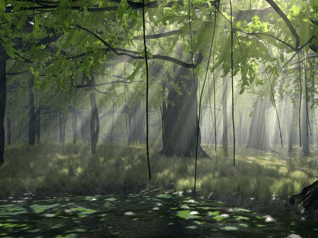 Zastavki com pictures 640x480 2012 nature forest forest 010852 29