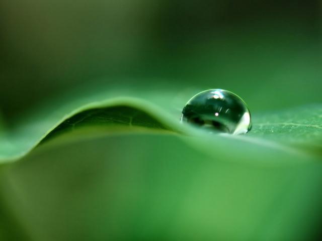 http://www.zastavki.com/pictures/640x480/2012/Nature_Plants_Rain_drop_on_a_leaf_008457_29.jpg
