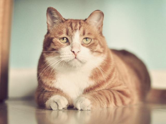 Евгений Литвинкович: Общение поклонников - Том XII - Страница 3 Animals___Cats_Red_sad_fat_cat_on_the_floor_046799_29