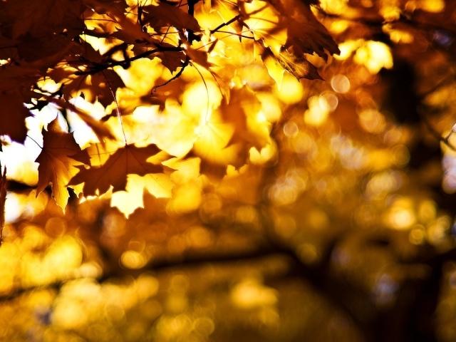 Осенние брызги цвета обои для