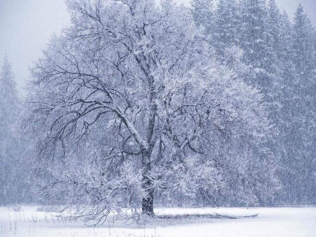 Картинки о метели зимой