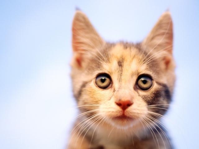 Взгляд кошки скачать обои для