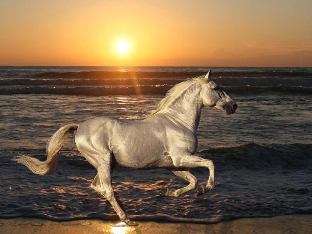Обои белая лошадь на пляже