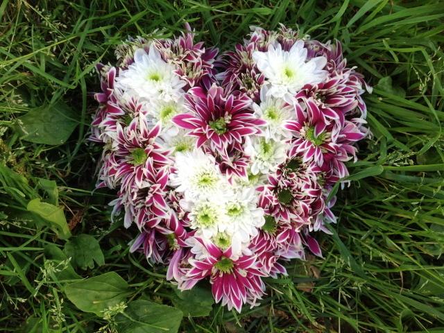Красивое сердце из цветов хризантема