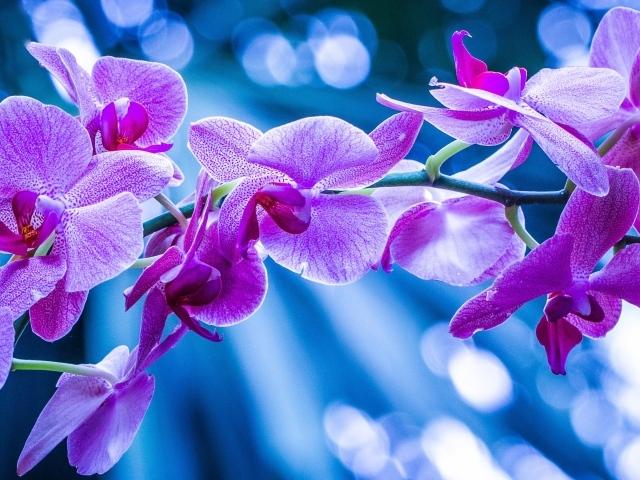 Фиолетовые дары флоры орхидеи