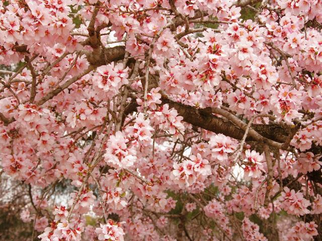 Обои красивое весеннее цветущее