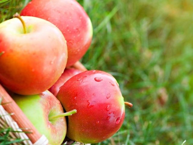 apple fruit background grass - photo #10