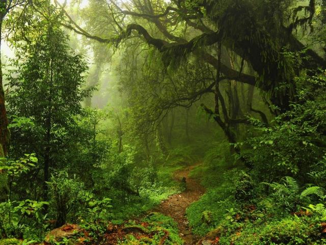 Чаща леса в мхах