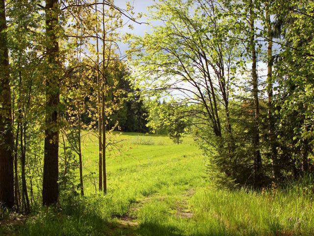 http://www.zastavki.com/pictures/640x480/2015/Nature___Seasons___Summer_____Warm__Sunny_summer_day_092884_29.jpg