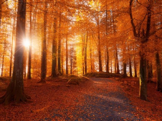 Роскошные пейзажи Норвегии - Страница 10 World___Norway_Autumn_forest_in_Norway_108029_29