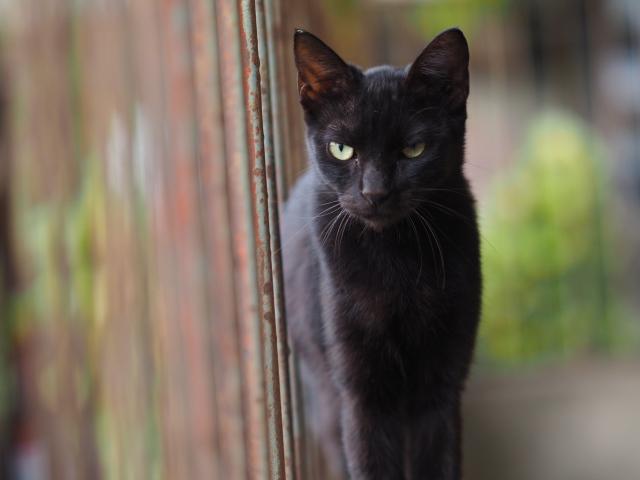 Картинки черного кота скачать