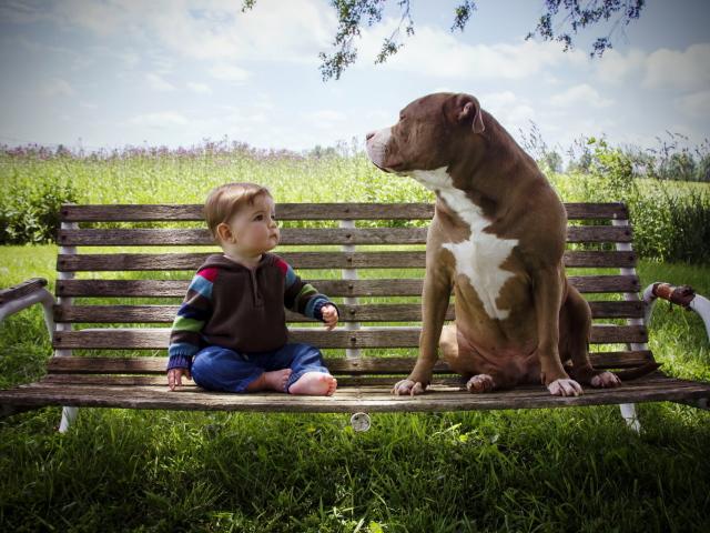 познакомлюсь с большой собакой
