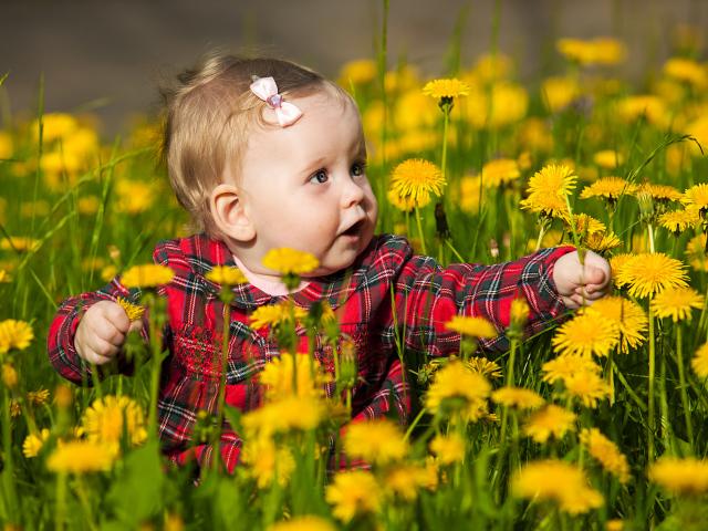 2017People___Children_Little_girl_is_sitting_in_yellow_dandelions_117363_29.jpg