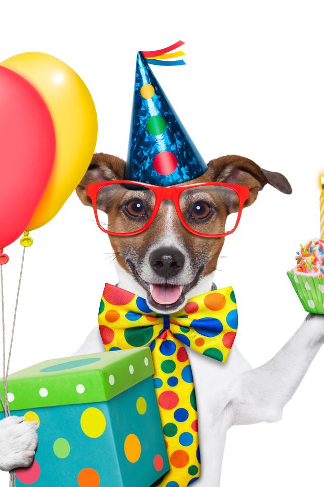 прикольные картинки к дню рождения собачки нежная