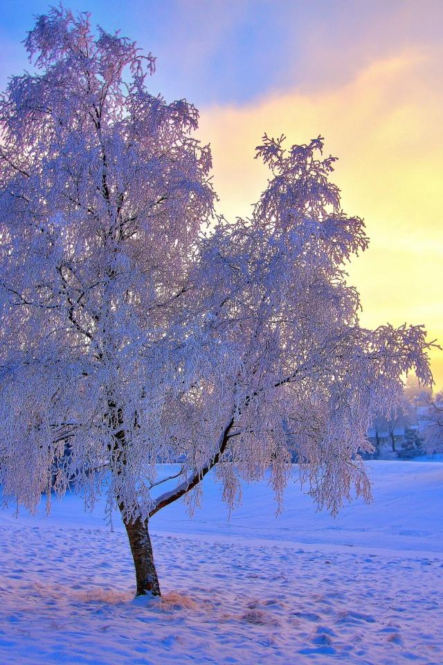 frozen trees widescreen wallpaper - photo #9