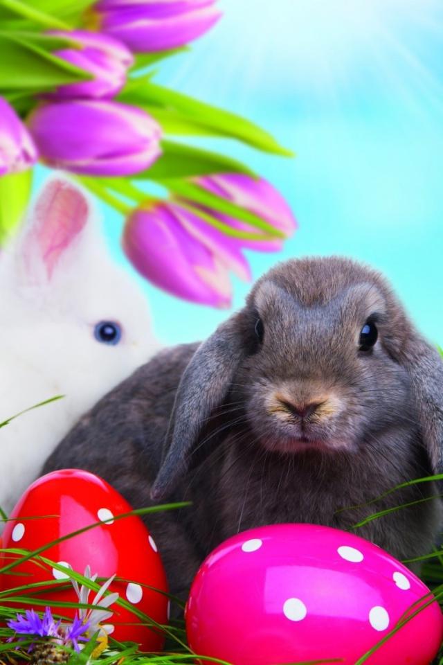 Обои для рабочего стола кролики прикольные