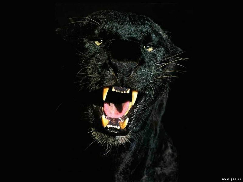 http://www.zastavki.com/pictures/800x600/Animals_Beasts__002119_7.jpg