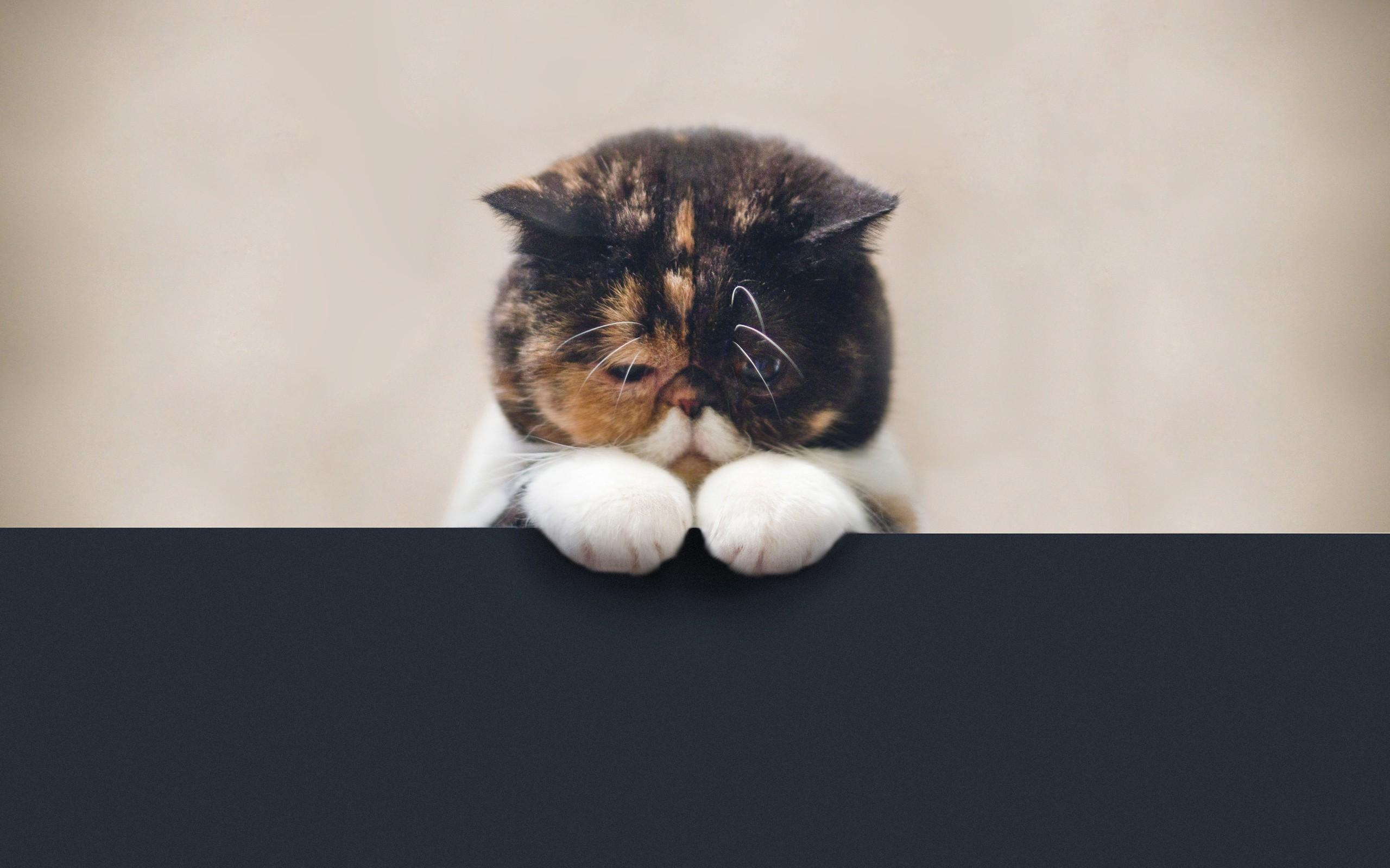 http://www.zastavki.com/pictures/originals/2012/Animals_Cats__035408_.jpg