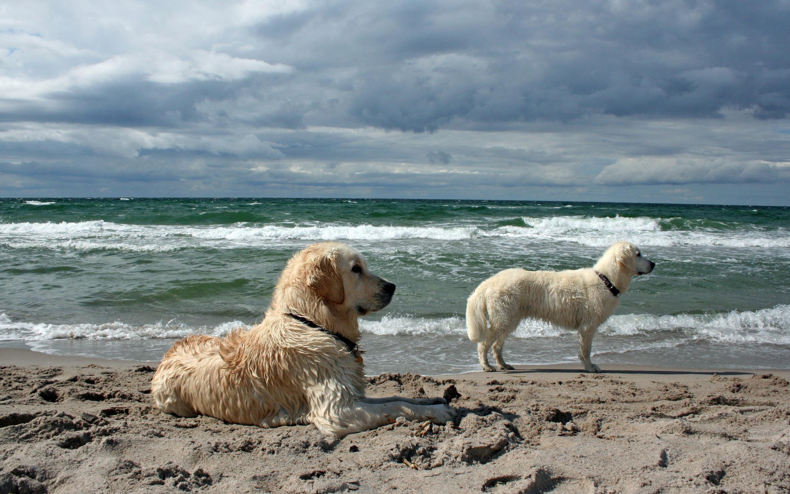 """""""Φύγανε οι σκύλοι και γιόμισε ψάρι η θάλασσα""""..."""