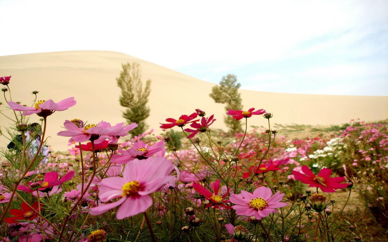 Полевые цветы  Стихотворение Ивана Бунина