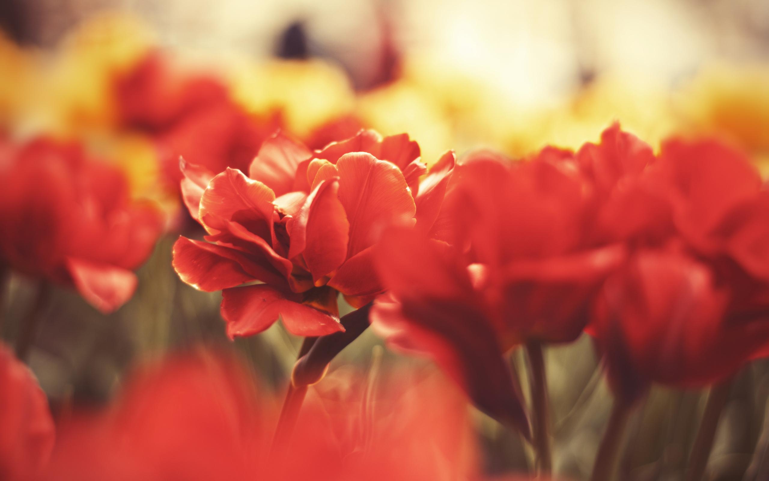 Фото цветов для фотокартин