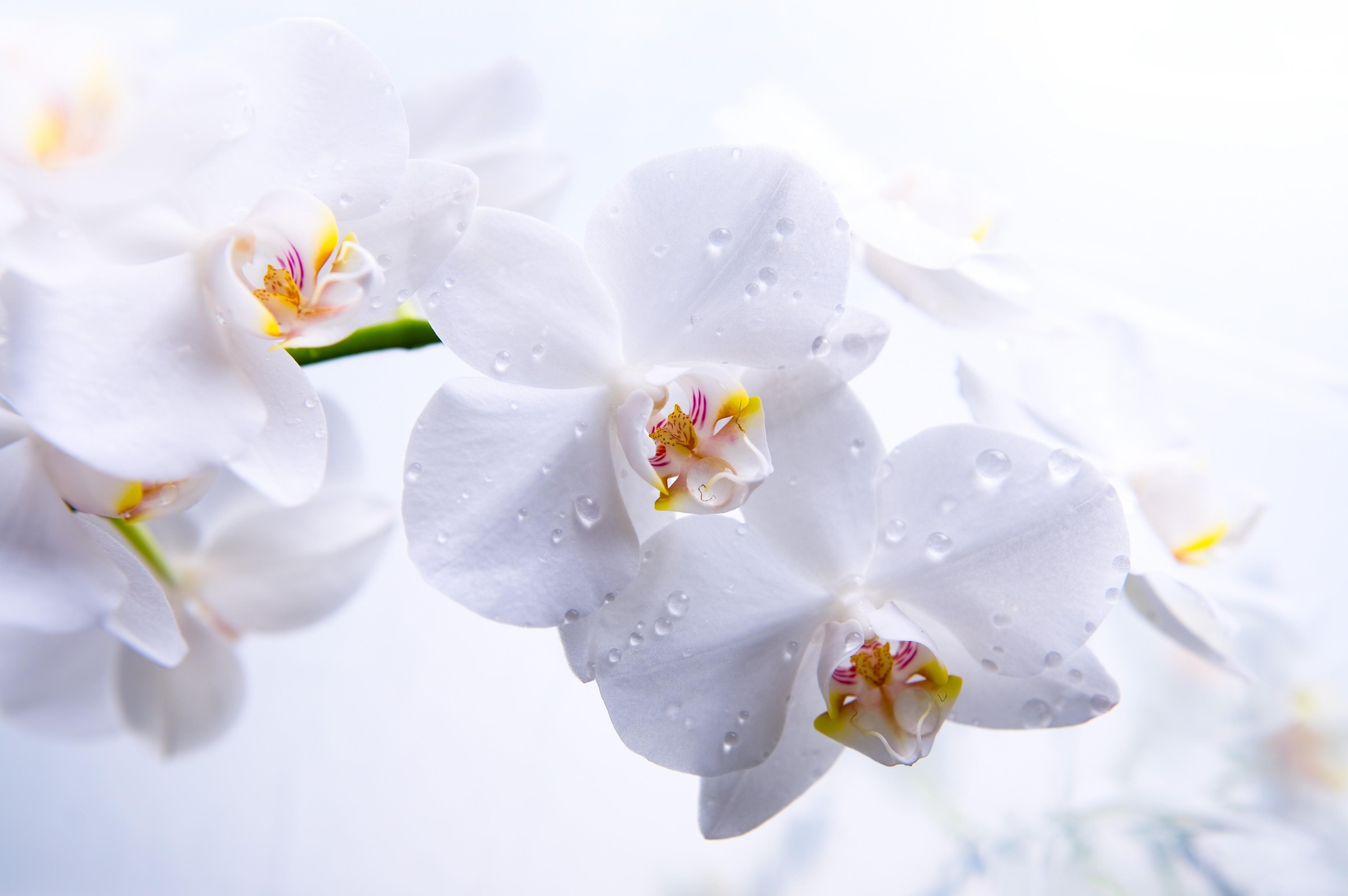 Картинки синие цветы - c778