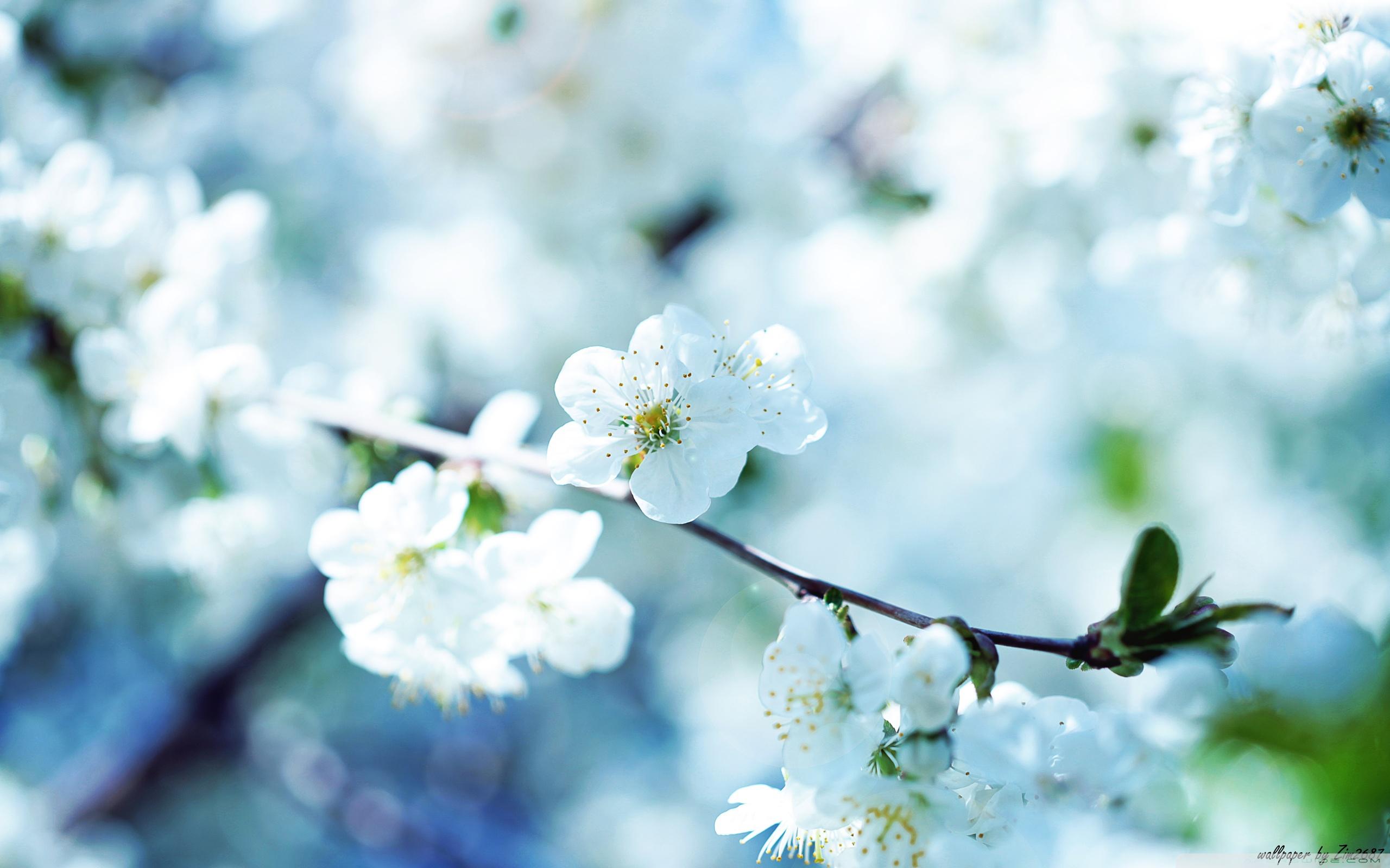 Картинки, картинки весна цветы природа на рабочий стол